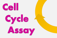 Cell Cycle Assay Solution Deep Red