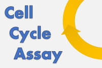 Cell Cycle Assay Solution Blue