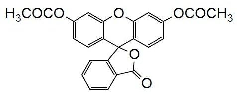 Cellstain-FDA